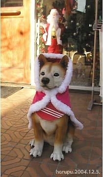 santa-coat-ni-nisewanko.jpg